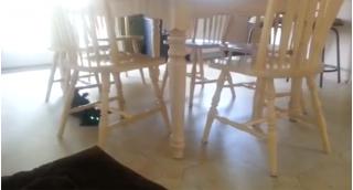 Зачем коту обеденный стол со стульями?