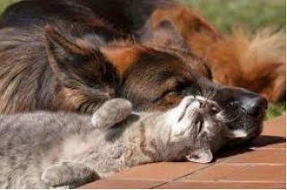 Пёс и тайная любовь к дивану