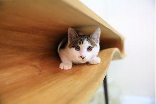 CATable - стол для котэ и его хозяина