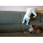 Битва за диван: кот или собака?