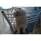 Хватит жрать мои стулья! Вкусно, Маркиз?